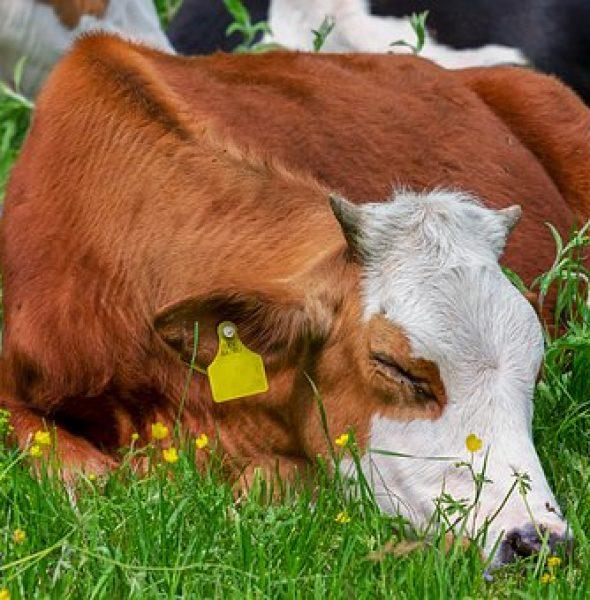 La natöra y sü tiers: Conosciamo l'habitat degli animali selvatici e da fattoria