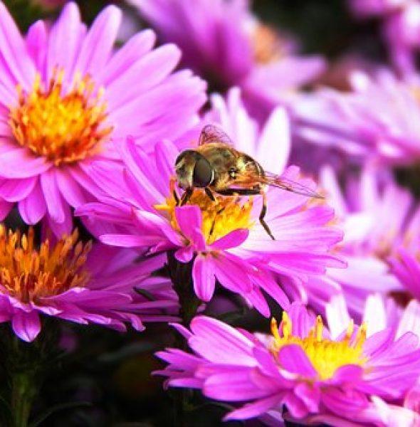 Les ês y les viles ladines – Volo con l'ape regina attraverso i masi ladini